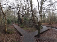Moseley Bog and Joy's Wood Local Nature Reserve - Coldbath Brook by Elliott Brown at https://flic.kr/p/dCZmcC