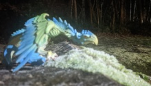 A wyvern looks sideways while posing over a field of ice and stone. There is a giant forest in the background. The wyvern-dragon is blue and green.
